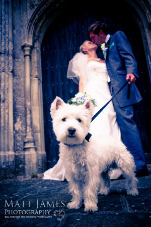Bride Groom and the Dog
